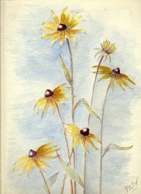 Watercolor Painting of Black-Eyed Susans by Nora Woodman (viewed 190 times)