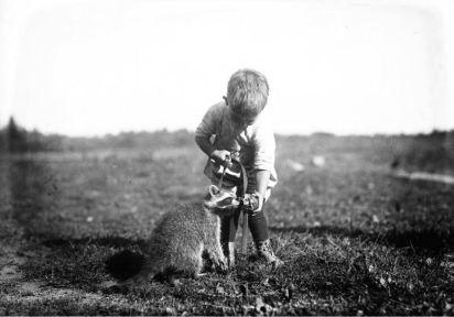 feeding racoon